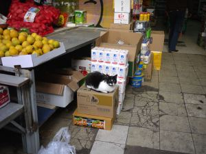 carmel market cat tel aviv ausplendor